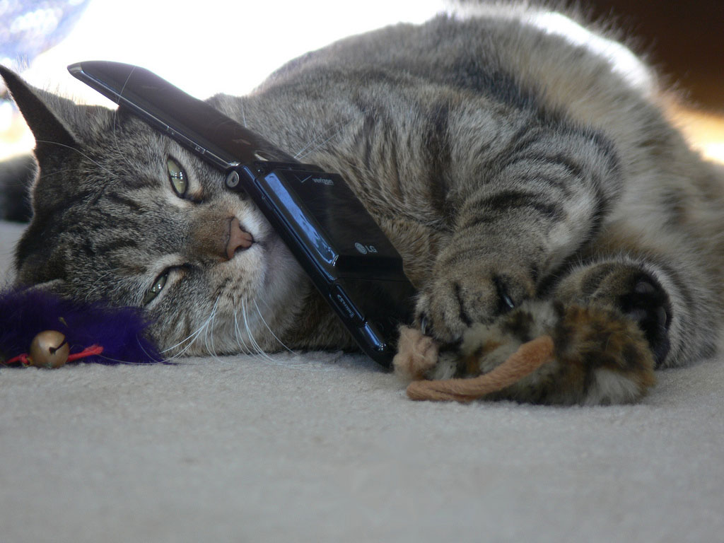 Image of a cat holding a cellphone