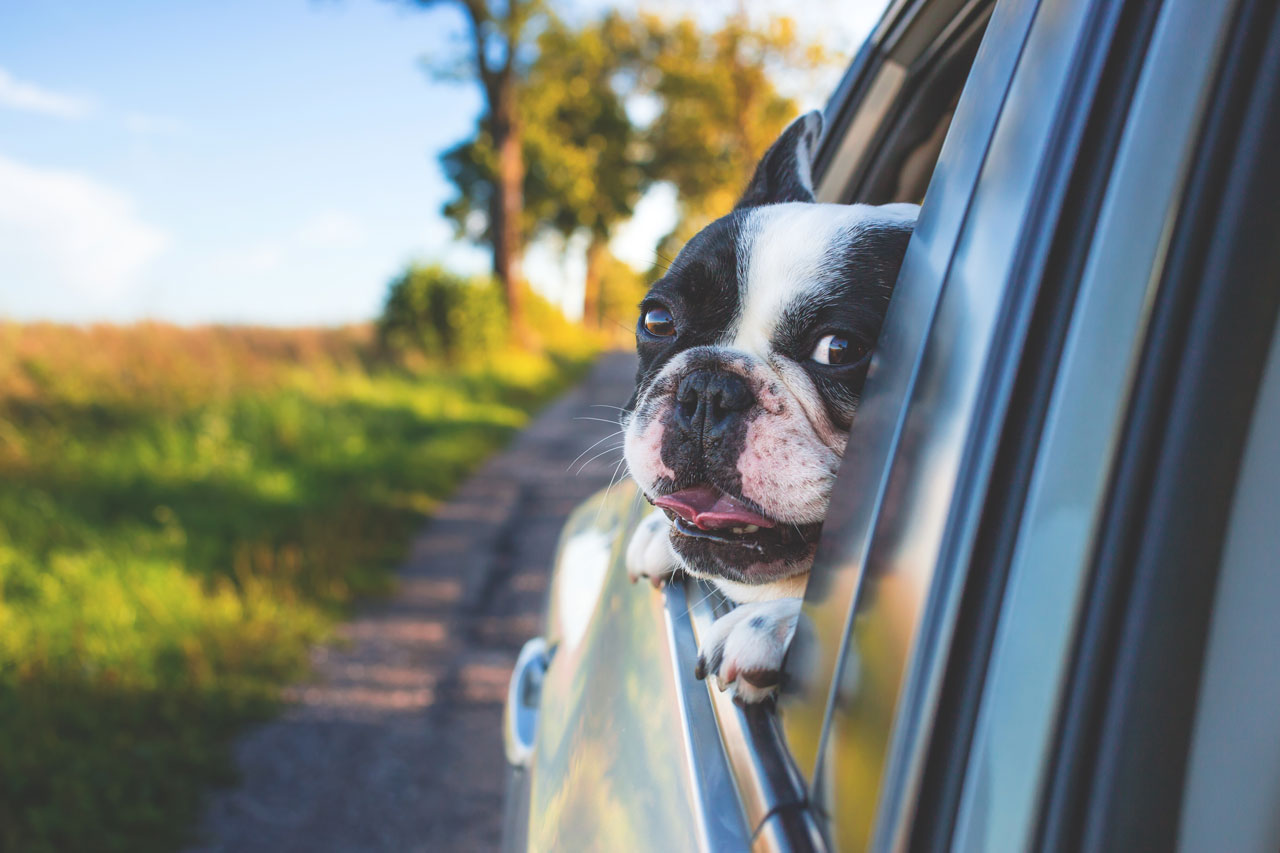 Image of a dog with its head out of a car window